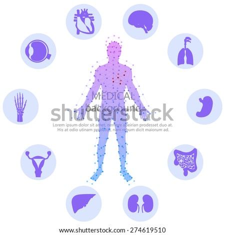 Medical background. Abstract model of man with points and lines. Vector background. Human anatomy, huge collection of human organs - stock vector