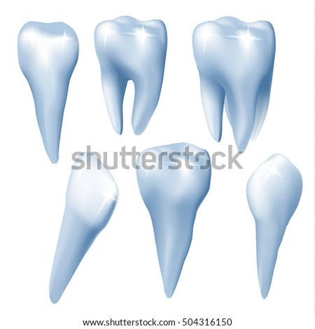 Medical design elements. Set of teeth on white background. Vector illustration