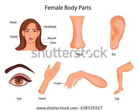 Female body part diagram