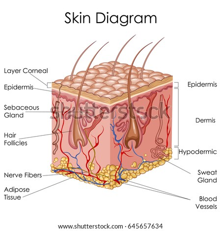 aging of the hair follicle pigmentation system pdf