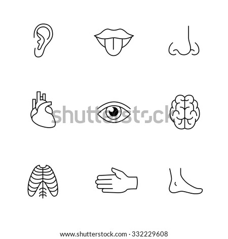 Medical icons thin line art set. Human organs, senses, and body parts. Black vector symbols isolated on white. - stock vector