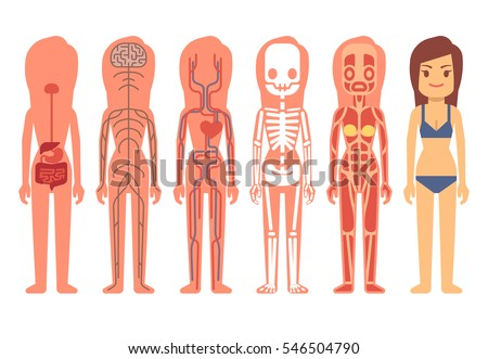 Medical woman body anatomy vector illustration. Skeleton, muscular, circulatory, nervous and digestive systems