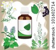 medicinal herbs  with bottle, vector illustration - stock photo
