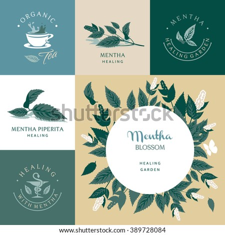 Mentha, set of vector elements and illustration - stock vector