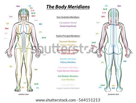 Meridian system chart female body principal stock vector 564151213