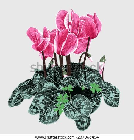 Meticulous hand-painted Begonia flowers vector - stock vector