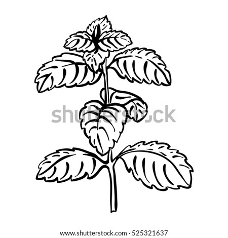 Mobilemint Herb Coloring Pages