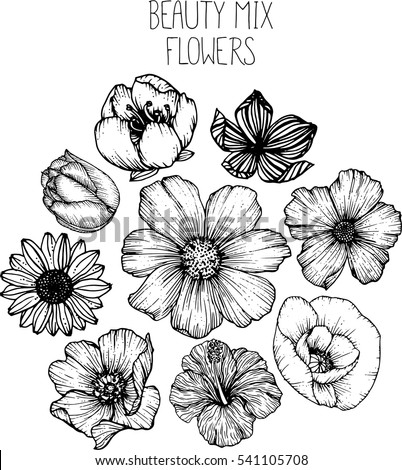 Black And White Flowers Stock Images Royalty Free Images