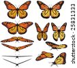 Monarch butterfly vector art in several different views and poses - stock photo