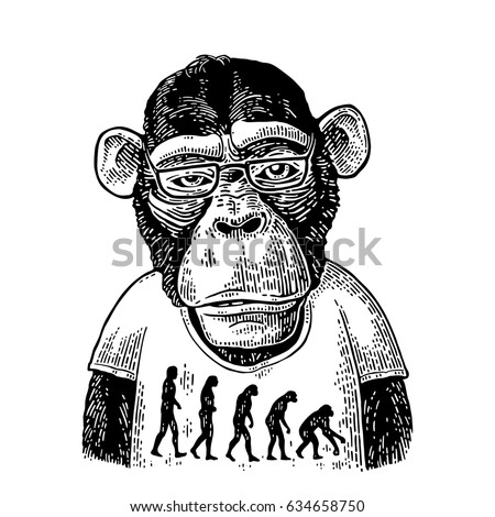 Monkeys dressed in human T-shirt with the theory of evolution on the contrary. From man to monkey. Vintage black engraving illustration for poster. Isolated on white background.