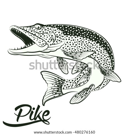 Pike Stock Images Royalty Free Images Vectors Shutterstock