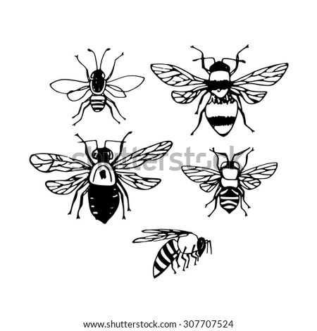 Monochrome set with different bees