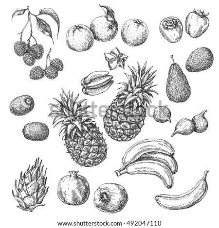 Monochrome Tropical Fruits Set. Hand drawn sketch of lychee, pomegranate, orange, banana, dragon fruit, fig, kiwi fruit, persimmon, starfruit, avocado and pineapple.