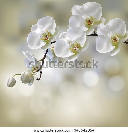 Moon Orchid flower vector on blur orchid background. Illustration of Moon Orchid.