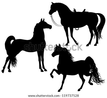 Morgan horses silhouettes isolated in white background - stock vector