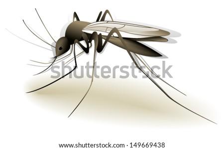 Mosquito - stock vector