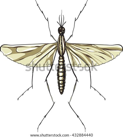 mosquito close-up isolated on white background. vector illustration - stock vector