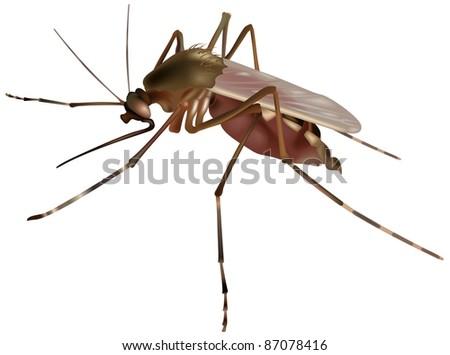 Mosquito - colored illustration, vector - stock vector