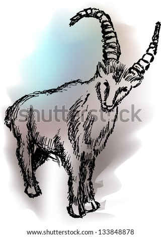 Mountain sheep  illustration