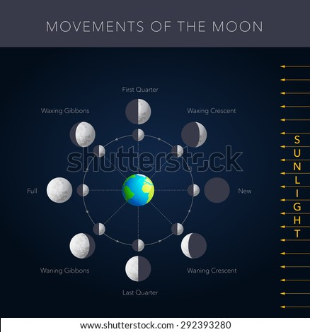 Movements of the moon, 8 lunar phases vector - stock vector