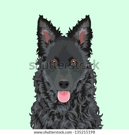 Mudi, The buddy dog - stock vector