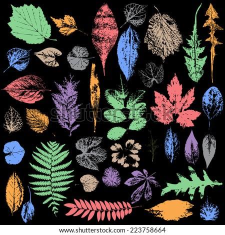 multicolor Autumn leaf silhouettes, seasonal  - stock vector
