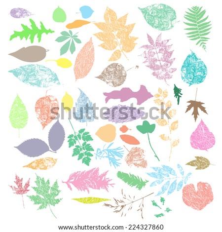 multicolor Autumn leaf silhouettes, seasonal set - stock vector