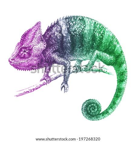 Multicolored vector chameleon - stock vector