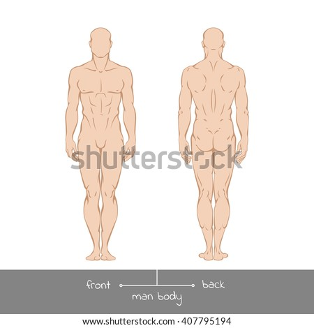 Muscular young man from front and back view. Healthy male body shapes outline colored vector illustration with the inscription: front and back. Vector illustration of a human figure in linear style - stock vector