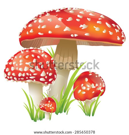 Mushroom mushroom red spotted a group - stock vector