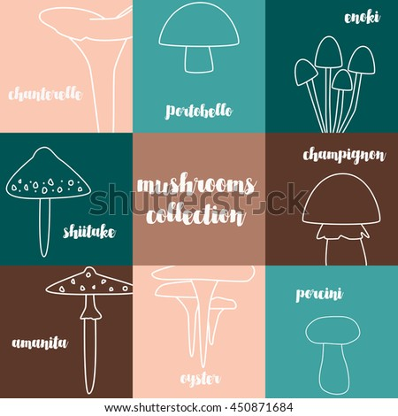 Mushrooms collection. The outlines of mushrooms on the background of colored squares. Fashionable design. Russula, amanita, wild mushrooms and other fungi on a colored background. Vector illustration - stock vector