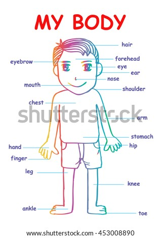 My body educational info graphic chart stock vector royalty free my body educational info graphic chart for kids showing parts of human body of ccuart Choice Image