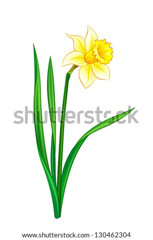 Narcissus - vector illustration. EPS10 format - stock vector