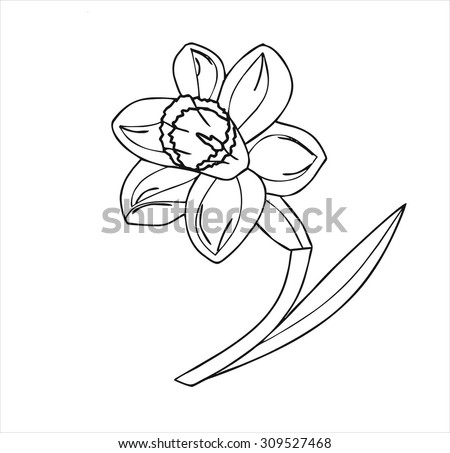 Narcissus, white, flower, Botanical, isolated, cartoon vector