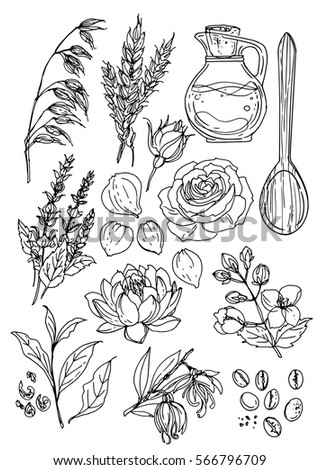 Natural cosmetics medicine set herbs flowers stock vector 566796709 natural cosmetics and medicine a set of herbs and flowers painted black line on a mightylinksfo