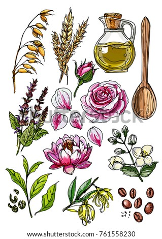 Natural cosmetics medicine set herbs flowers stock vector hd natural cosmetics and medicine a set of herbs and flowers painted black line on a mightylinksfo