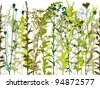 Natural wild plants and weeds silhouettes set – seamless horizontal vector background. - stock vector