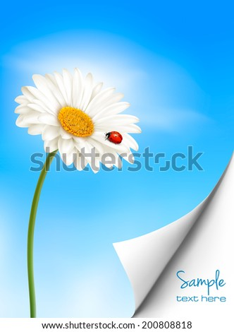 Nature summer background with daisy flower with ladybug. Vector illustration.  - stock vector