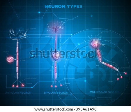 Neuron types, cells that is the main part of the nervous system. Abstract blue technology background. - stock vector