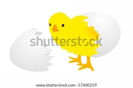 Newborn chick and eggshell - stock vector