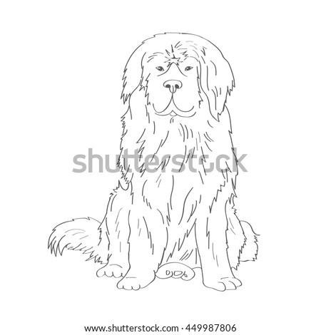 Newfoundland Big Dog With Thick Long Hair Large Breed Favorite Pets Friend