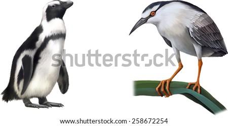 Night Heron bird, gentoo penguin. Vector illustration isolated on white background - stock vector