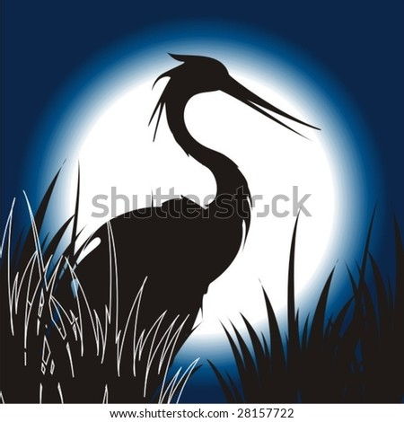 night landscape with bird