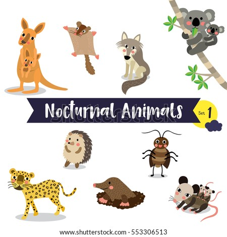 nocturnal animals berlin