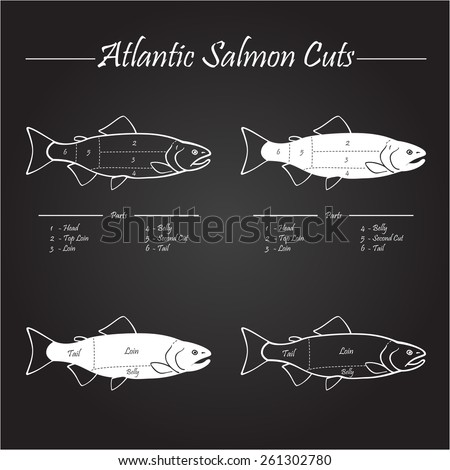Norwegian Atlantic salmon cutting diagram illustration,on chalkboard - stock vector