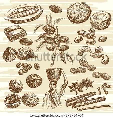 Nuts collection. Hand drawn nuts. Nuts and fruits. Nuts harvest. Picking nuts. - stock vector