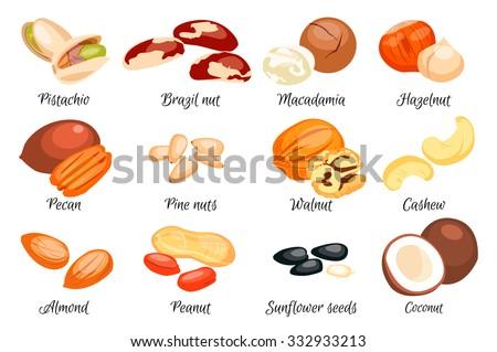 Nuts set - hazelnut, almond, pistachio, pecan, cashew, brazil nut, walnut, peanut, coconut, macadamia, sunflower seeds and pine nuts. Vector illustration. Eps 10.