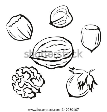 Nuts Set, Walnut and Hazel Monochrome Black Pictograms Icons Isolated on White Background. Vector