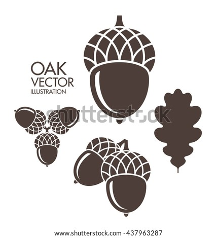Oak Leaf And Acorn Stock Images, Royalty-Free Images ...