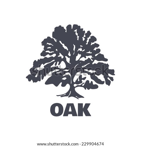 Oak Tree Stock Images, Royalty-Free Images & Vectors | Shutterstock